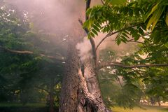 Smoke comes from the tree. The trunk burns in the park royalty free stock photos