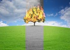 Tree burning Royalty Free Stock Images
