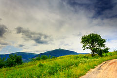 Tree and bush on a glade near the mountain road under a heavy cl Royalty Free Stock Photography