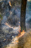 Tree and bushes on fire with wildfire Stock Photo