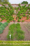 Tree and bushes in Kitchen Garden of Audley End House Stock Photos