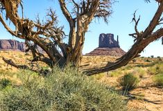 Tree and bushes, Monument Valley Royalty Free Stock Photos