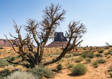 Tree and bushes, Monument Valley Stock Photos