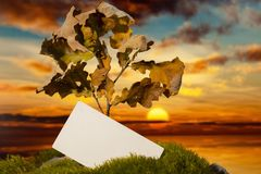 Business card on moss at sunset. Tree and business card on moss at sunset Royalty Free Stock Image