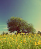Tree on buttercups meadow - vintage retro style Royalty Free Stock Image