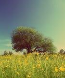 Tree on buttercups meadow - vintage retro style. Landscape with strange tree on buttercups meadow - vintage retro style Royalty Free Stock Image