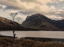 The tree, Buttermere Royalty Free Stock Photography