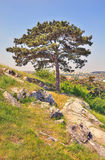 Tree. Of Calvary hill in Nitra - Slovakia Royalty Free Stock Images