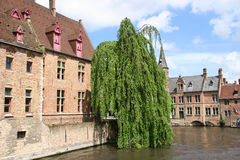 Tree and Canal. In Brugge royalty free stock photos