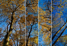 Tree Canopies Collage. Collection of tree canopies in autumn Stock Photography