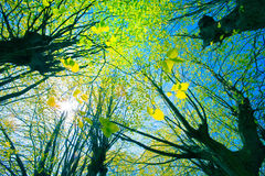 Tree canopy Stock Images