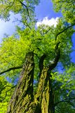 Tree canopy Stock Photo