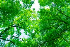 Tree canopy Stock Photography