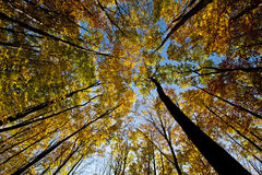 Tree canopy. Tree canopy in autumn royalty free stock images