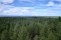 Tree canopy from above Royalty Free Stock Images