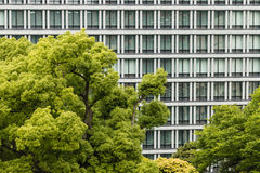 Tree canopy against office windows Stock Photo