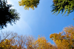 Tree canopy in autumn around with sky Royalty Free Stock Images