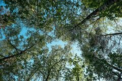 Tree Canopy Background Stock Photography