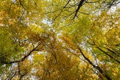 Tree Canopy in the Fall Stock Photos