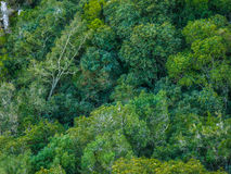 Tree canopy fro m above a forest Royalty Free Stock Images
