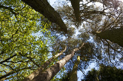 Tree Canopy Stock Photo