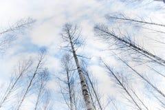 Tree canopy Stock Image