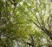 Tree canopy  nature. Royalty Free Stock Photos