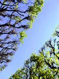 Tree canopy Royalty Free Stock Photos