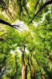 Tree canopy Royalty Free Stock Photos