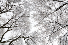 Tree canopy in a snow storm Royalty Free Stock Photos
