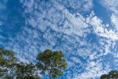 Tree canopy Stock Photography