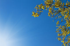 Tree canopy with a sunny sky Stock Photo