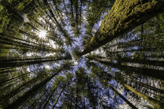 A Tree Canopy And A Sunstar Royalty Free Stock Photo