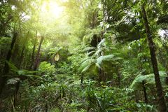 Canopy of jungle Royalty Free Stock Photos