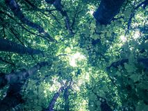Tree canopy viewed from below Stock Photos