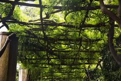Tree canopy Stock Photos