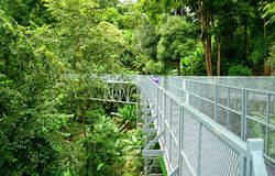 Tree Canopy Walkway, The Iron Bridge in the tropical forest