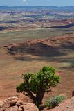 Tree in Canyonlands Stock Photography
