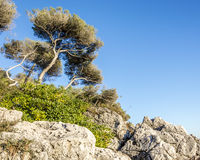 Tree in Cap Martin Royalty Free Stock Photography