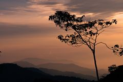 Sunset with silhoette tree and mountains in the background