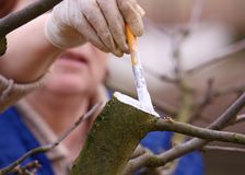 Tree care Stock Image