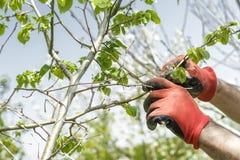Tree care. In the garden Stock Photos