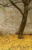 Tree with carpet of yellow leaves Stock Photography