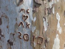 A Tree Carving of Initials and a Heart. A sycamore tree is a great tree to carve initials upon with it`s natural self-peeling bark royalty free stock photos
