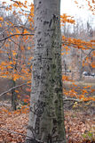 Tree Carvings. A tree is carved with various initials and expressions. Autumn leaves are in the background stock image