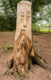 Tree carvings. At Knaesborough, Yorkshire Stock Images