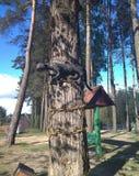 Tree cat Royalty Free Stock Photography