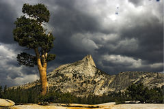 Tree and Cathedral Peak. Yosemite National Park, California, United States royalty free stock image