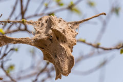 Tree caught with a disease Stock Photography