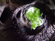 Tree cave Royalty Free Stock Photo